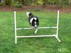 Dog Agility Instructions to make an inexpensive PVC bar jump at home! I made one last weekend! Agility Training For Dogs, Dog Agility, Dog Training Tips, Zee Dog, Education Canine, Dog Activities, Dog Boarding, Dog Life, Dog Toys