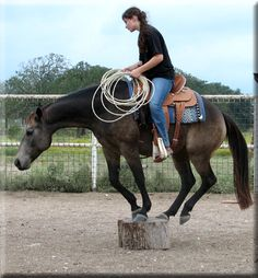 I understand the point of extreme training here, but is there really a point to… All The Pretty Horses, Beautiful Horses, Horse Training Tips, Cowboy Horse, Western Riding, Natural Horsemanship, Horse World, Horse Pictures, Horse Care