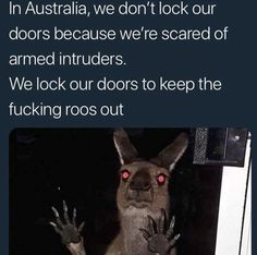 "Top Relatable Memes Australia These ""Top Relatable Memes Australia"" will make you laugh so hard. So scroll down and keep reading these ""Top Relatable Memes Australia"". Australian Memes, Aussie Memes, Australian Accent, Really Funny, Funny Cute, The Funny, Funny Koala, Funny Animals, Koala Meme"