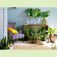 نگهداری #گل و #گیاه در منزل  با فرا رسیدن فصل #سرما نگهداری از گل و گیاه در #منزل کار مشکلی است ولی این کار غیر ممکن نیست . با #ایده های #جدید می توانید به #گیاهان خود وعده یک #پاییز و #زمستان دلپذیر را بدهید.  چه کسی گفته است که داشتن گل و گیاه نیاز به یک #باغ بزرگ یا #گلخانه دارد .راهکارهای زیادی برای نگهداری #گلدان های #زیبا در منزل وجود دارد.   #دکوراسیون #دکوراسیون_منزل #دکوراسیون_داخلی #ایده_طراحی #طراحی_دکور #چهلنما #مجله_دکوراسیون #فروشگاه_آنلاین #خرید_آنلاین  #ایده