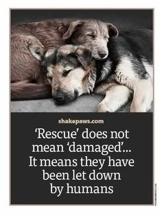 Adoption is the only pets I adopt.wish I could save all the dogs let down by humans. Shelter Dogs, Animal Shelter, Rescue Dogs, Rescue Dog Quotes, Pet Quotes, Funny Quotes, Smile Quotes, Shelters, All Dogs