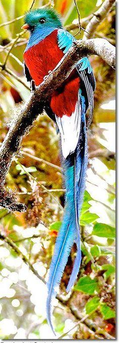 Preciosa ave multicolor.