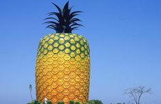"""Here is """"Big Pineapple"""", the largest pineapple building in the world! - Here is """"Big Pineapple"""", the largest pineapple building in the world!"""