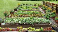 How To Keep Your Garden Growing All Summer Long