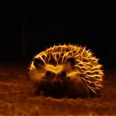 Hedgehog by megaossa