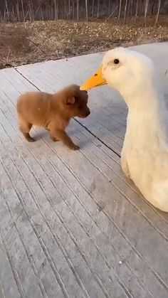 Baby Animals Pictures, Cute Animal Photos, Cute Animal Videos, Funny Animal Pictures, Animals And Pets, Nature Animals, Cute Little Animals, Cute Funny Animals, Funny Dogs