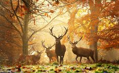 Richmond Park - the largest Royal Park in London; famous for red and fallow deer; features the Isabella Plantation, several notable buildings, and a protected view of St. Paul's Cathedral