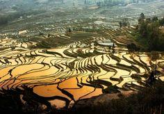Rice Terrace Landscape Photograph