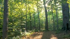 General 1600x900 Mormon The Sacred Grove nature forest