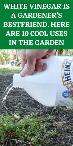 Garden Yard Ideas, Diy Garden Projects, Lawn And Garden, Garden Tips, Garden Layouts, Indoor Garden, Home Vegetable Garden, Fruit Garden, Veggie Gardens