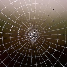 the structure of spiders - Google Search