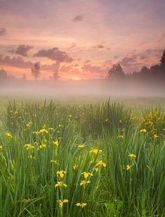 Morning Harmony by *DeingeL! The Beauty of a cool misty flower strewn Valley floor looking to the rock swept hills make a picture of that special place, mountains ago where God found my heart and encouraged it to life. Now My Love for Him blossoms as these flowers burst open to love.
