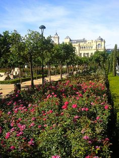 Malaga Rose Garden in Spain.