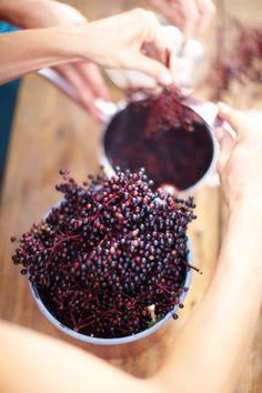 Recept na podzimní bezinkový likér - Tchibo blog Blackberry, Good Food, Food And Drink, Smoothie, Homemade, Fruit, Drinks, Eat, Blog