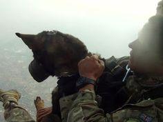 """""""O Grito do Bicho"""": Os 'cães paraquedistas' que combatem caçadores de ..."""