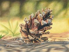 Pine Cone - colored pencil drawing by kad-portraits.deviantart.com on @DeviantArt