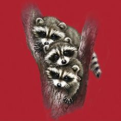 #racoons #cute #funny #kids #children #tshirts #tee #clothing