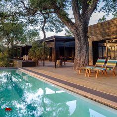 Die schönsten, privaten Lodges im Krüger Nationalpark