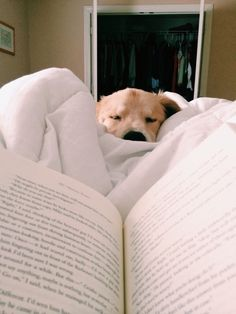 I would give anything to read like this again with my dog!  </3