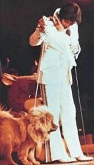 Elvis' Dog on stage with him.