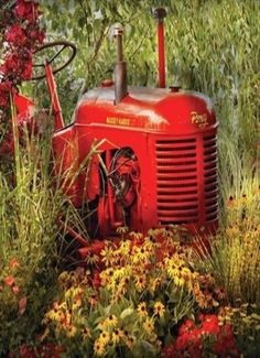 This looks like a Farmall.  This on is put to rest in a meadow or by a creek.  Dad had International's for years, i think they were called Farmalls too.  Then in later years he finally got his much awaited John Deere.  I always preferred the red ones, because those are the ones I drove and worked on.