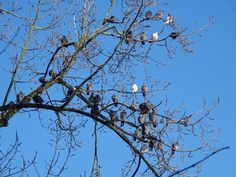 All birds warming up in de wintersun. Citypark GN ....pics from Renne & Dini