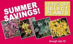 Summer Savings 10-15% Off Select Plants!