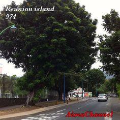 #reunionisland#ile#trees#arbres#iledelareunion#974#team974#otélaréunion#gotoreunionisland#lareunion#photo#photoamateur#photography#instaisland#loveisland#monile#photoisland#### by aimachannelyt