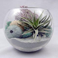 This sea inspired terrarium captures a bit of the beach landscape for your home, office, or wedding centerpiece. Will arrive as a kit:    Glass bowl (approximately 5 tall)  Grey sand  Tillandsia harrisii  Sea fan piece  Blue reindeer moss  Golden honey painted sea urchin Sea Foam Silver painted sea urchin  Care sheet included      *we are unable to ship plants internationally and to Hawaii    /// Please review the link below for shipping and processing time…