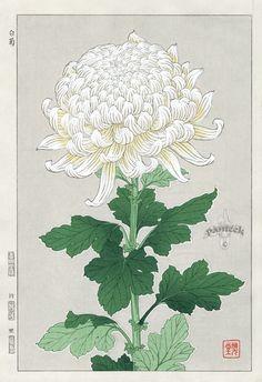 Shin Hanga Woodblock Botanical Prints 1939-1970's