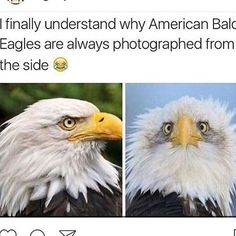"""4,528 Likes, 27 Comments - Maddie's Memes And Things (@funny_clean_owl) on Instagram: """" -Maddie #funny #cleanfunny #humor #cleanhumor #comedy #cleancomedy #memes #meme #cleanmemes…"""""""