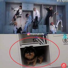 ➳ live the moment with bts memes! Foto Bts, Bts Dogs, Army Memes, Bts Taehyung, Bts Jimin, Bts Memes Hilarious, Bts And Exo, Bts Playlist, Jin