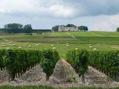 Ch. d'Yquem, Sauternes Vineyard, Outdoor, Outdoors, Vineyard Vines, Outdoor Games, Outdoor Living