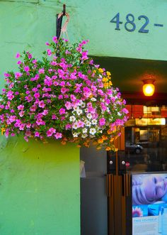 hanging flower basket, may 2012 by rosanne maccormick-keen, via Flickr