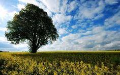 tree in a field - Google Search