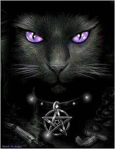 They say black cats are bad luck... maybe that's been the problem my whole life; I happen to love black cats!                                                                                                                                                      More