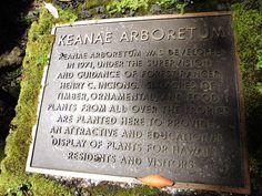 Keanae Arboretum on pieni, kaunis arboretum eli puulajipuisto Hana Roadin varrella. Road To Hana, Maui Hawaii, Tropical, Beautiful, Pictures, Ankara Dress