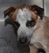 Bonnie, Hound Mix, 6 months, Female  - Find me on pawschicago.org!