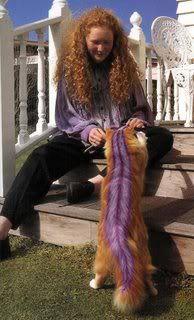 Painted cat, purple skunk stripe