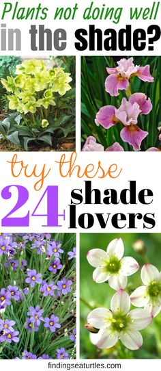 Spectacular Shade Garden Perennials - Finding Sea Turtles Problem with shade garden? Try these 24 Spectacular shade loving plantsProblem with shade garden? Try these 24 Spectacular shade loving plants Plants, Beautiful Gardens, Planting Flowers, Shade Garden Plants, Perennials, Flower Garden, Outdoor Plants, Urban Garden, Shade Plants