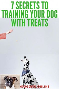 Dog Training Teaching Obedience In The Home 2112431830