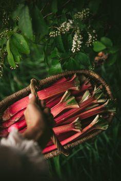 Lemon Chiffon & Rhubarb Fool Cake - The Kitchen McCabe Rhubarb Compote, Rhubarb Rhubarb, Pink Sauce, Rhubarb Recipes, Angel Food Cake, Chiffon Cake, Spring Recipes, Types Of Food, Fruit Trees