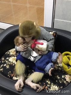 Mom Monkey gives little kisses to her baby while feeding him