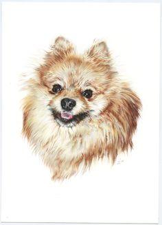 Pomerania. Illustration pencil. Ilustración lápiz. Dog portrait Pomeranian, Doge, Line Drawing, Dog Breeds, Husky, Art Drawings, Illustration, Pet Portraits, Amazing Pencil Drawings