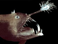 Cool web site about incredible deep sea creatures: The Deep
