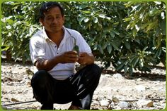 Domingo Guzman in his avocado orchard. He is part of the La Grama Coop in Peru. #workers #farmers #Fairtrade