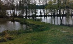 Ein Tag im Leben eines Wasserwarts, wir begleiten einen #Wasserwart bei der Arbeit.  Im Sommer beginnt ein Tag im Leben eines Wasserwarts mit dem Morgengrauen, John Levell bewirtschaftet – die #Somerley #Lakes in #Hampshire.  http://www.angelstunde.de/ein-tag-im-leben-eines-wasserwarts/