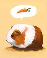 Many Guinea Pigs/Cavies love fresh carrots!   (Speaking For All Guinea Pigs by *ninjaink on deviantART)
