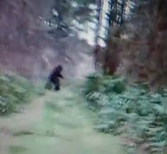 Oregon bigfoot sighting , Hwy 36 near the fire station at Low Pass