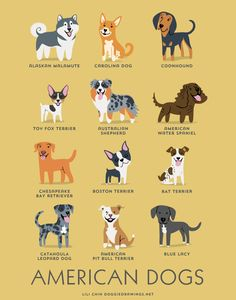 AMERICAN DOGS art print dog breeds from the USA by doggiedrawings, $10.00